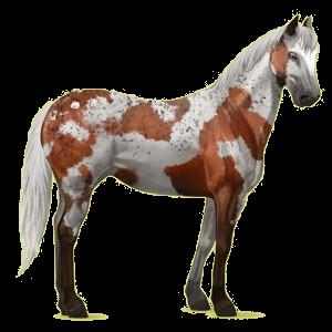 Riding Horse Quarter Horse Cremello
