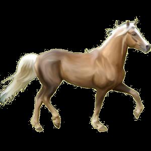 Pegasus pony Connemara Palomino