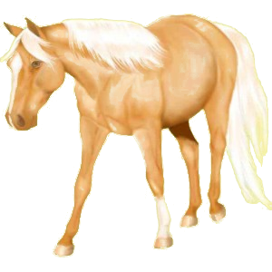 Riding Horse Quarter Horse Palomino