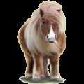 Pony Chincoteague Pony Dapple gray Tobiano