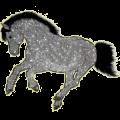 Pegasus pony Connemara Dapple Gray