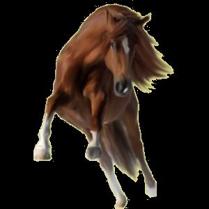 Pegasus pony Newfoundland Pony Dark Bay