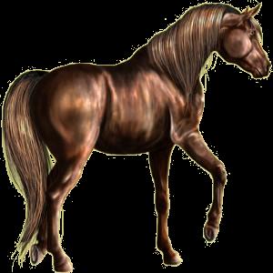 Riding Horse Irish Hunter Bay