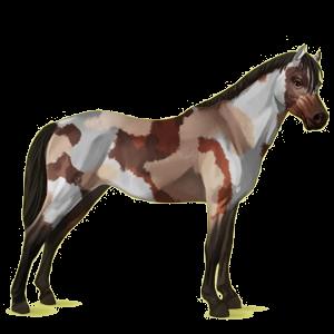 Pony Welsh Cherry bay