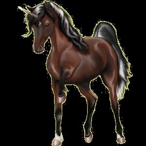 Unicorn pony Australian Pony Cherry bay