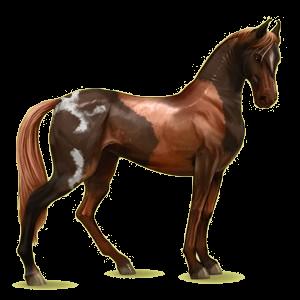 Riding Horse Marwari Chestnut