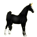 Riding unicorn Tennessee Walker Black
