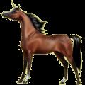 Unicorn pony Connemara Palomino