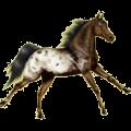 Riding Horse Appaloosa Chestnut Leopard