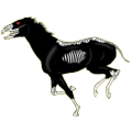 Riding Horse Hanoverian Black