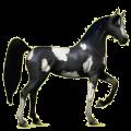 Riding Horse Black