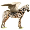 Pegasus pony Australian Pony Bay