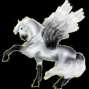 Pegasus pony Australian Pony Dapple Gray