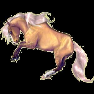 Riding Horse Quarter Horse Palomino