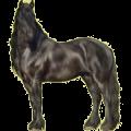 Riding Horse Russian Don Horse Black