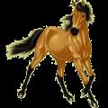 Riding Horse Quarter Horse Dun