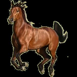 Riding Horse Mustang Roan