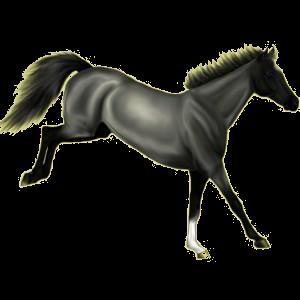 Riding Horse Quarter Horse Mouse Gray