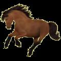 Riding Horse Hanoverian Bay