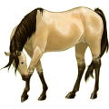 Riding Horse Quarter Horse Roan