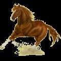 Riding Horse Quarter Horse Liver chestnut