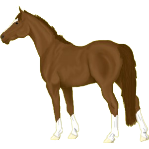 Riding Horse Irish Hunter Light Gray