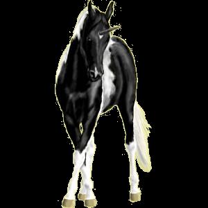 Winged riding unicorn Paint Horse Mouse gray Tobiano