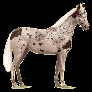 Riding Horse Hanoverian Dapple Gray