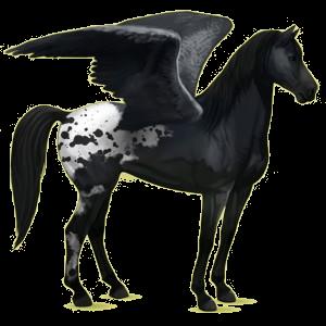 Riding pegasus Mustang Black Spotted Blanket