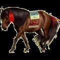 Riding Horse Purebred Spanish Horse Dark Bay