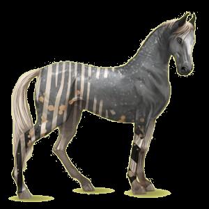 Riding Horse Marwari Dark Bay