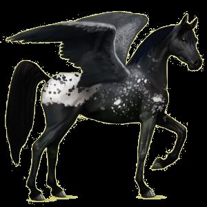 Riding pegasus Arabian Horse Fleabitten Gray