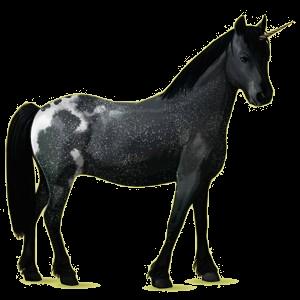 Unicorn pony Chincoteague Pony Black