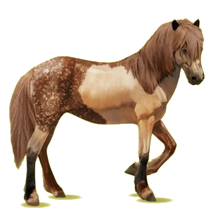 Riding Horse Brumby Chestnut