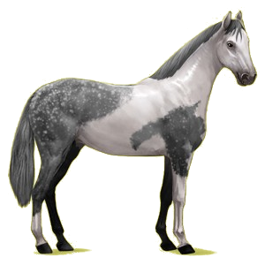 Riding Horse Hanoverian Dapple Gray