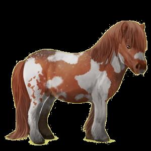 Pony Shetland Palomino