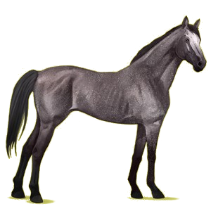 Riding Horse Thoroughbred Roan
