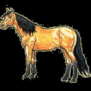 Riding Horse Quarter Horse Cherry bay