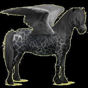 Pegasus pony Newfoundland Pony Roan