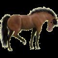 Riding Horse Purebred Spanish Horse Cherry bay