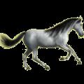 Riding Horse Hanoverian Mouse Gray