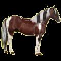Riding pegasus Paint Horse Bay Tovero