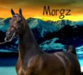 morgz