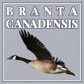 branta canadensis
