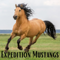 expedition mustangs