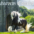 vanners of camelot