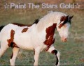 ☆paint the stars gold☆