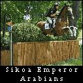 sikoa emperor arabians