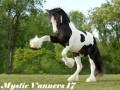 mystic vanners 17