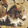 Øđyşşey donkeyş